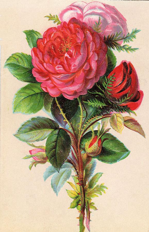 Vintage Flower clipart flower bunch Vintage Art – Graphics Beautiful