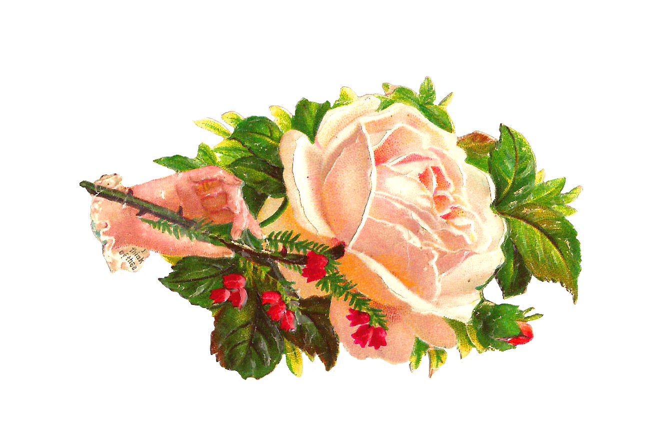 White Rose clipart graphic Flower Free January 2013 Antique