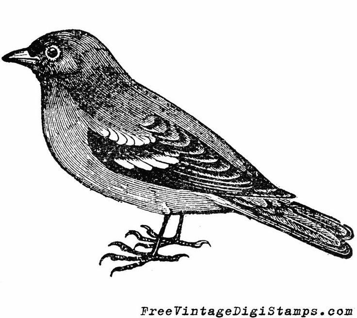 Mockingbird clipart sparrow 86Ts9WPIBoQ/UtvneRSRlZI on bp vintage clipart