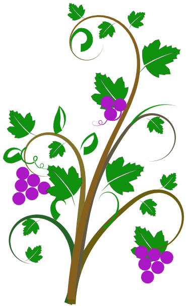 Vine clipart Plants clip assorted vine Clipart