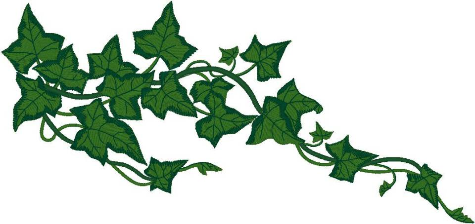 Ivy clipart grape leaves Ivy Type 713; File Views