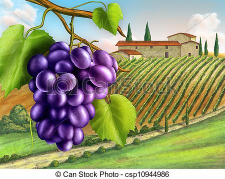 Vineyard clipart Fruits  Vineyard and of