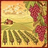 Vineyard clipart Vineyard Vineyard Vineyard landscape white