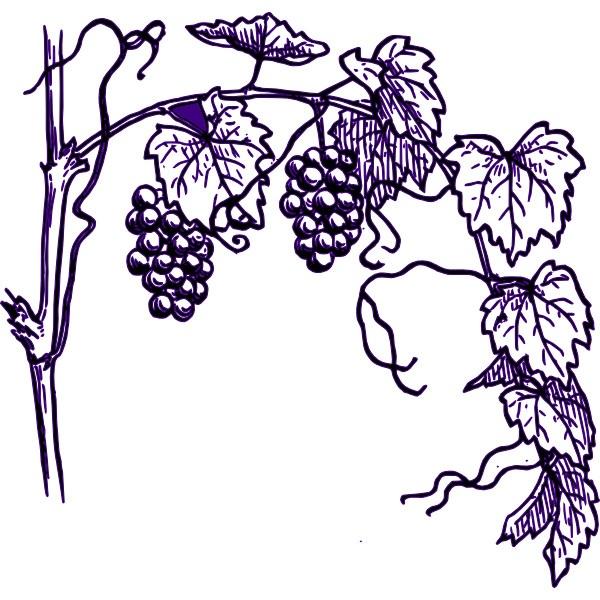 Vineyard clipart  Clipart Vineyard 600x600 Resolution