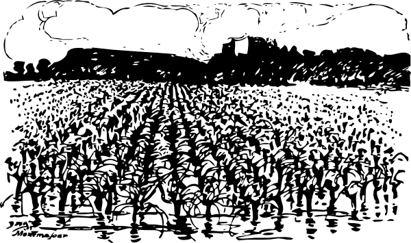 Cornfield clipart rice crop Com art at Art Vegetation