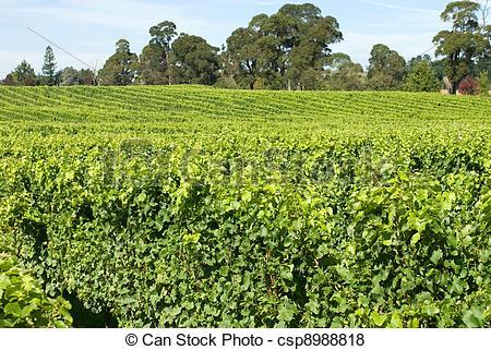 Vineyard clipart crop View growing Pictures Scene