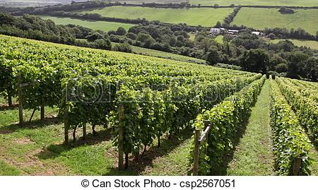 Vineyard clipart crop Photography / vineyard csp2567051 vineyard