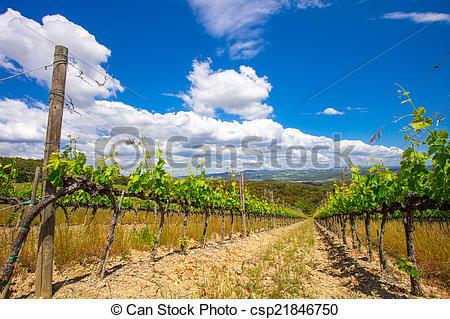 Vineyard clipart crop Chianti  Stock Vineyard Vineyard