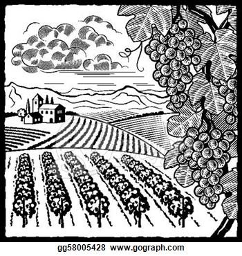 Vineyard clipart drawing Vineyard Drawing Clipart Cliparts Zone