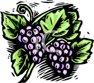 Grape clipart two Image Purple Leaves Leaves Grapes
