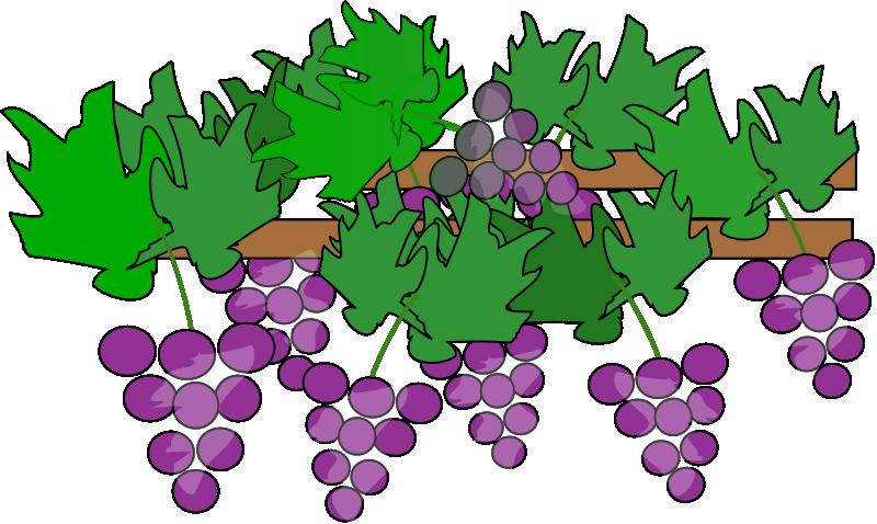 Grape clipart grape vine Clip Clip art Art Free