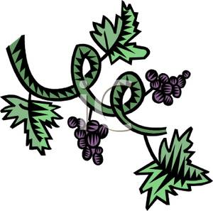 Vineyard clipart grape plant Purple on Image: Free Clipart