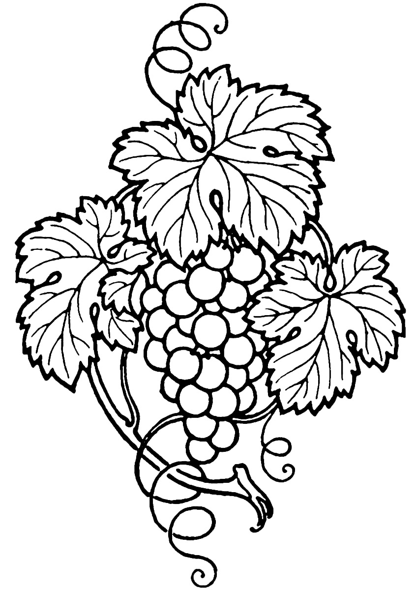 Vineyard clipart grape plant Wine And Panda Free Clipart