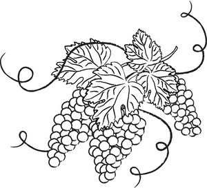 Vineyard clipart grape plant Vine Grapes Grapes & branches