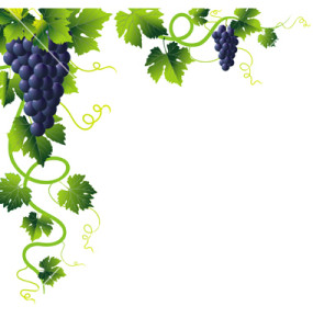 Vineyard clipart grape plant Sale For clipart Clipground grapes