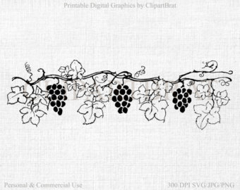 Vineyard clipart grape plant Transfer Grape Commercial Grape CLIPART