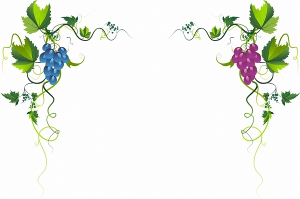 Vineyard clipart grape plant Download (946 Free vineyard