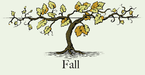 Vineyard clipart grape tree The In County Wine harvest