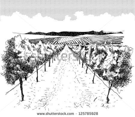 Vineyard clipart hand drawn Pictures Pencil DrawnVineyardVectorsStock Photos Images