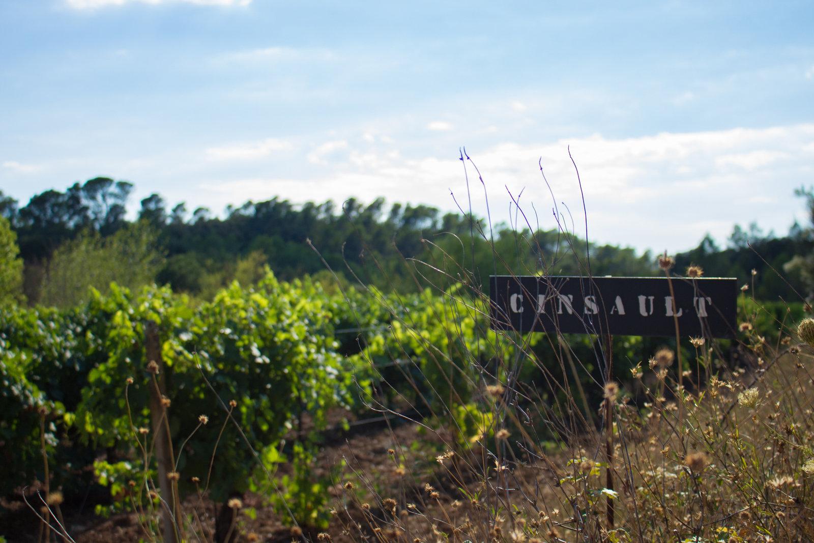 Vineyard clipart land Our values pride  vineyard