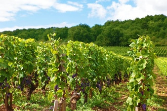 Vineyard clipart land In files PSD Download and