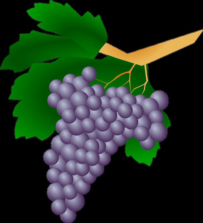 Grape clipart mix fruit #4