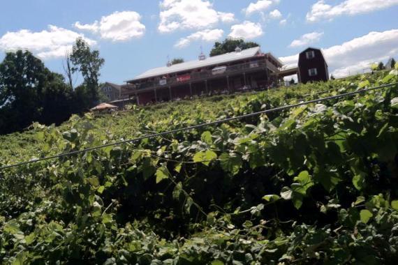 Vineyard clipart rural community The & Breweries & Wineries
