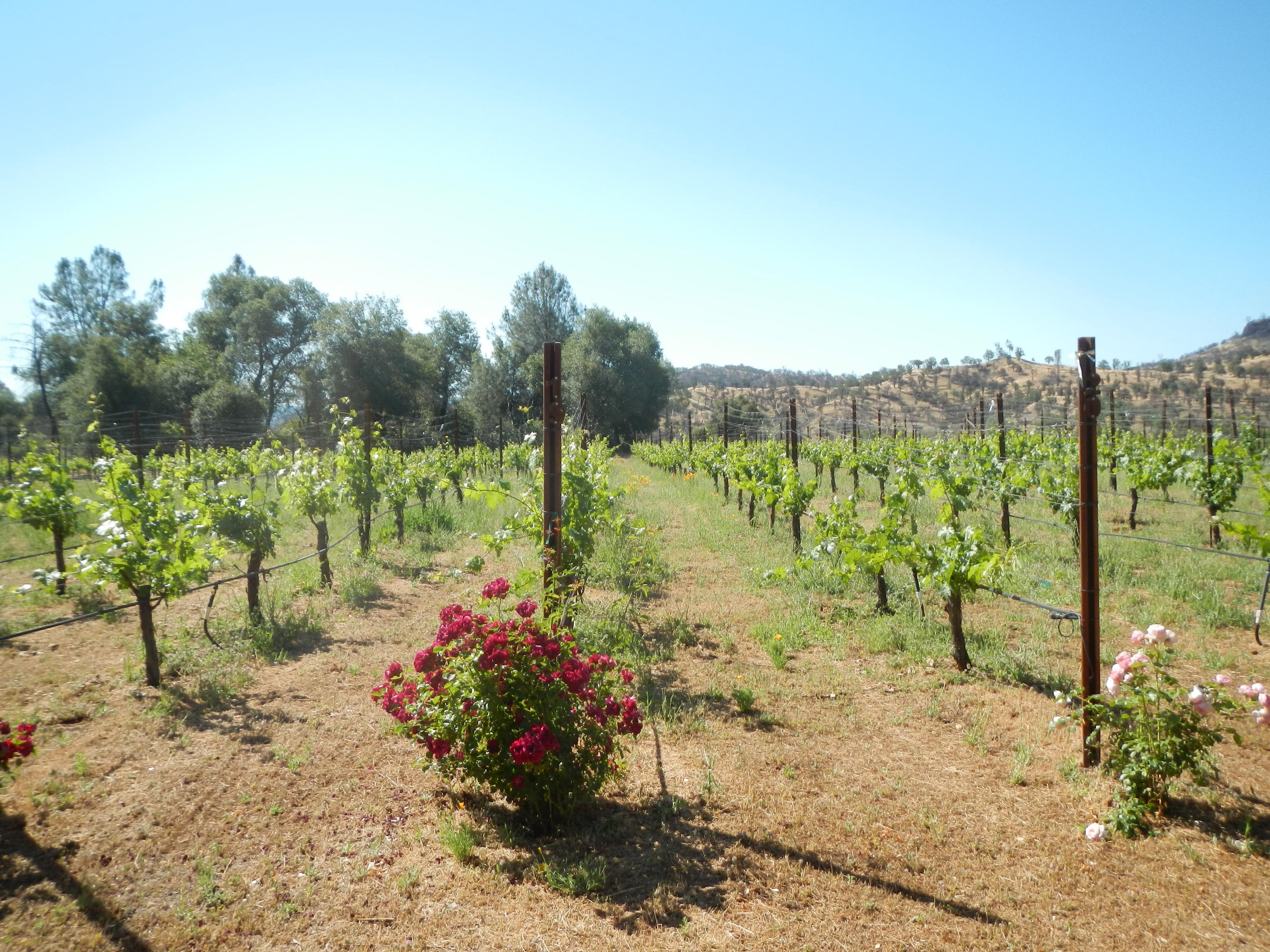 Vineyard clipart rural community AROUND Cellars WINERY – THE