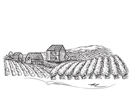 Vineyard clipart village Com and Fields Vineyard Landscape