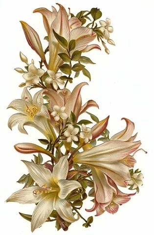 Vintage Flower clipart #11