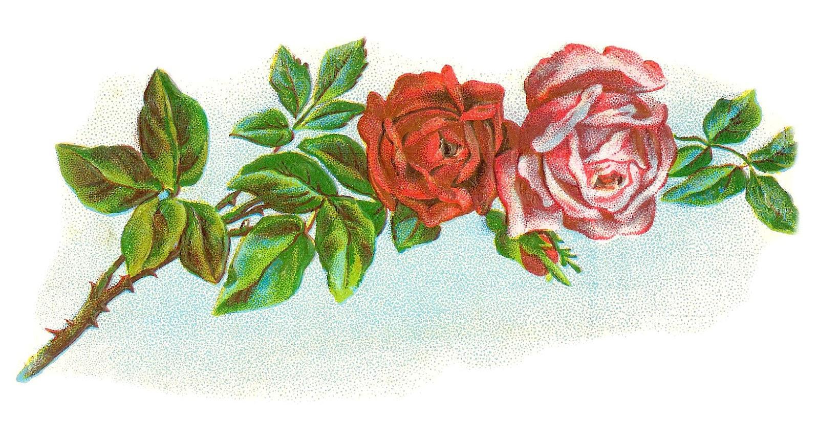 Rose clipart antique flower #6