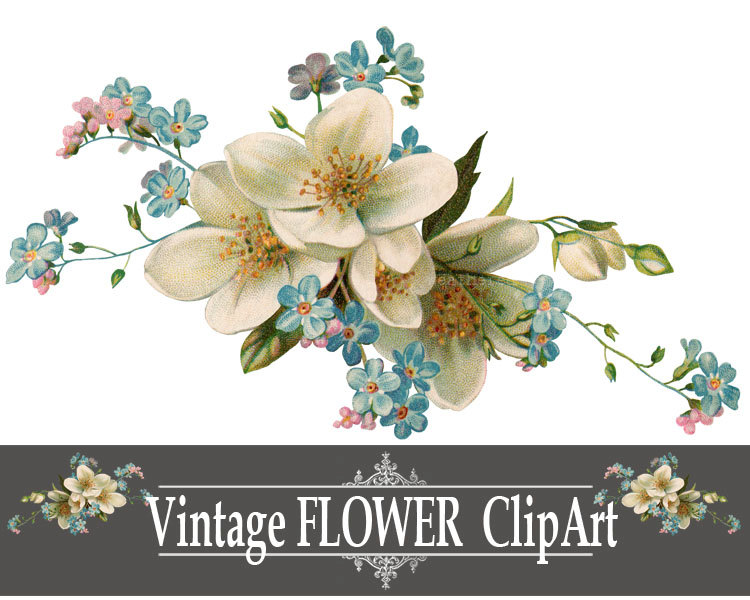 Vintage Flower clipart antique Print this White Find Flowers