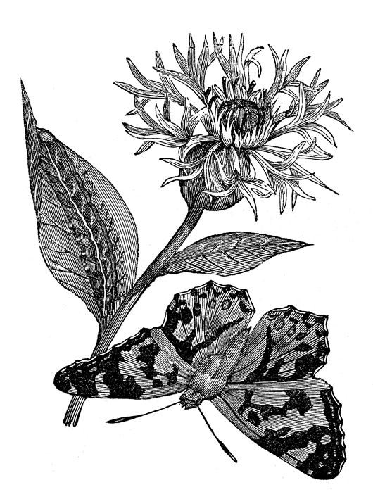 Fairy Botanical Clip Flower The