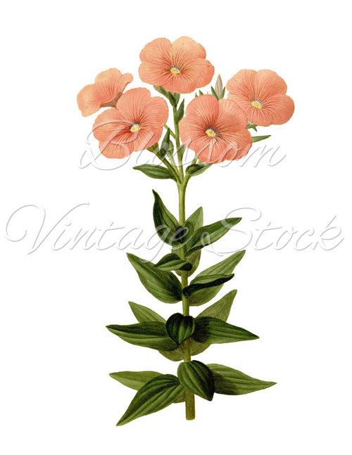 Botanical image · · Clipart