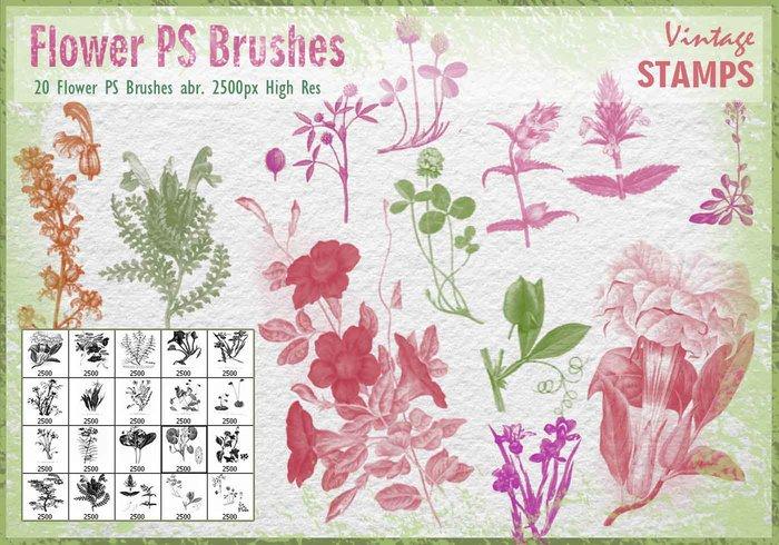 Vintage Flower clipart brush Free at Brushes PS Brushes