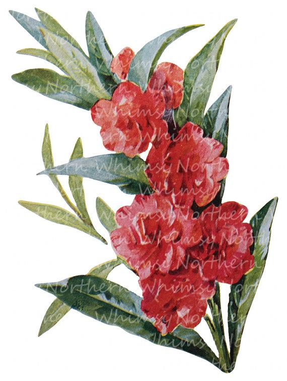 Vintage Flower clipart colored Flower Illustration Clip Floral –