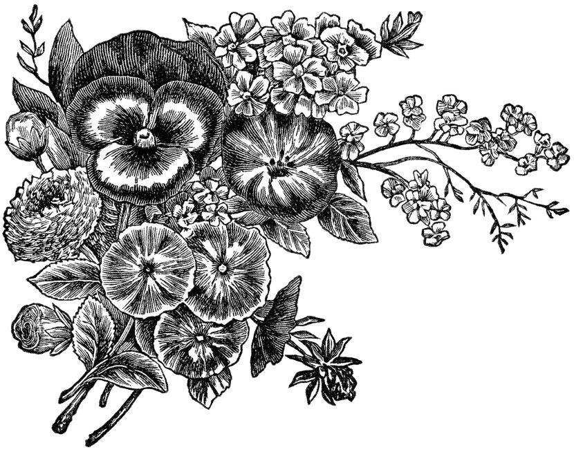 Vintage Flower clipart gardening Free white And black and