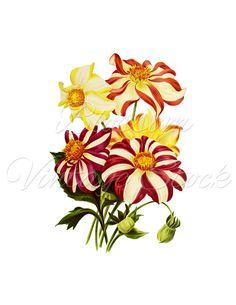 Vintage Flower clipart illustration Flower Flowers PNG Clipart Prints