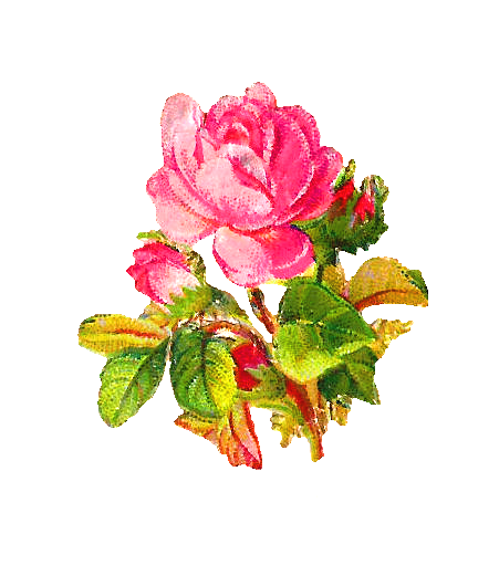 Vintage Flower clipart pink rose Vintage Antique  Download Clip