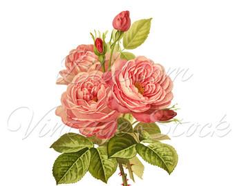 Vintage Flower clipart pink rose Digital Image Rose INSTANT Vintage