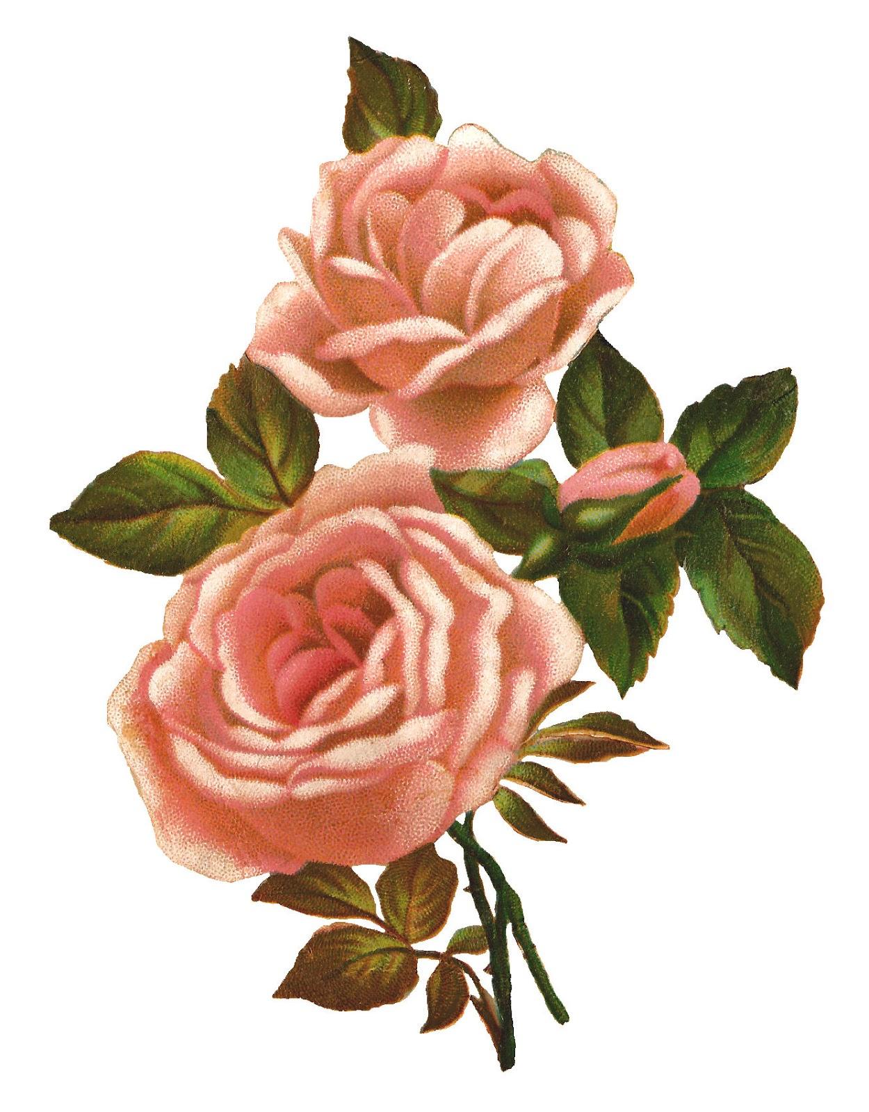 Vintage Flower clipart pink rose Shabby Antique Clip Flower Vintage