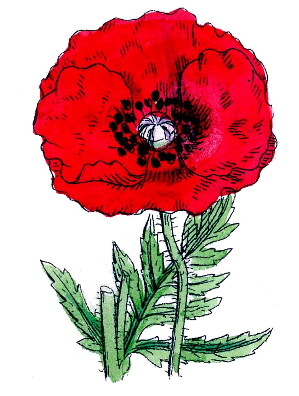 Red Flower clipart poppy flower #8