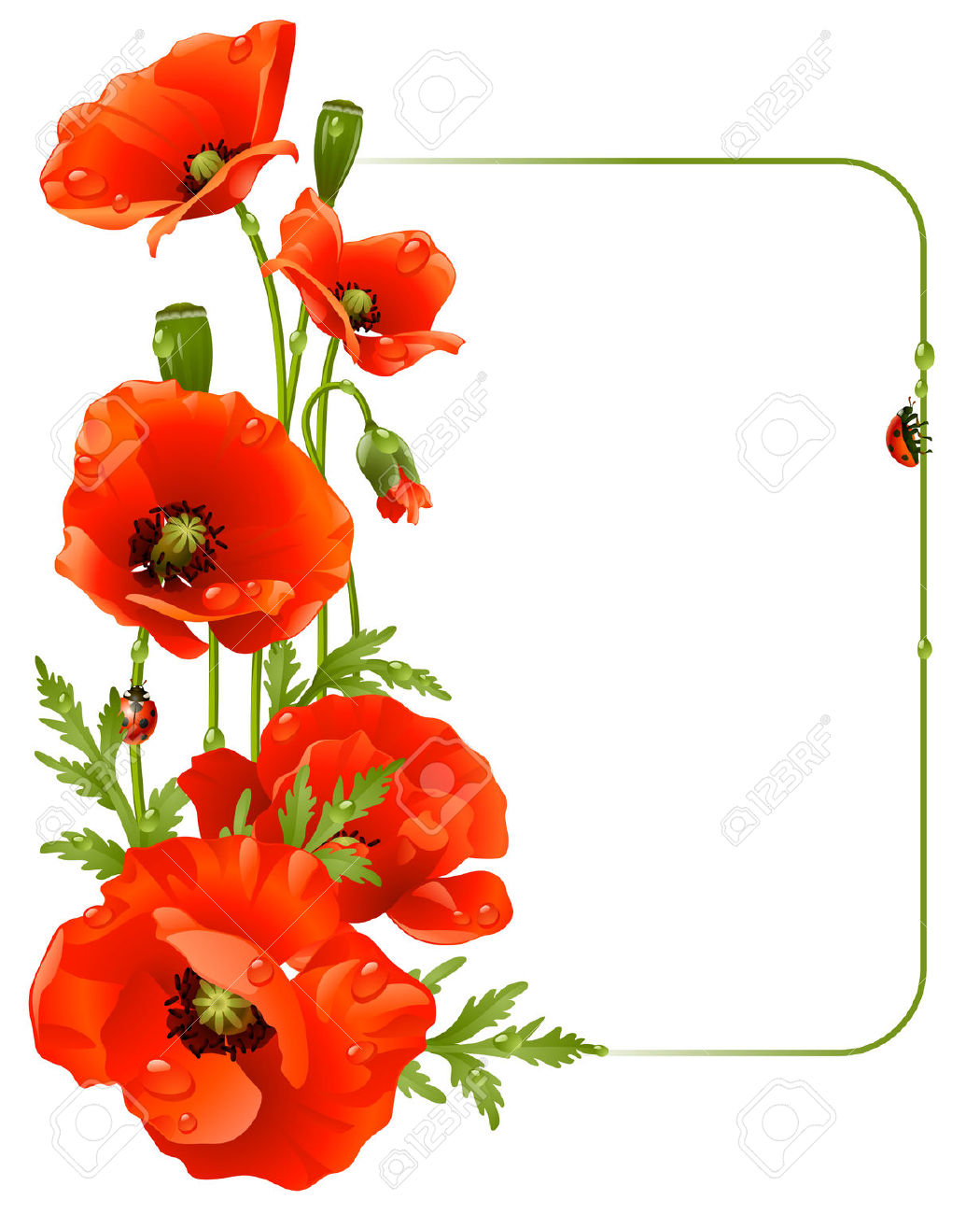Orange Flower clipart flower bottom border Clipart poppy red Search something