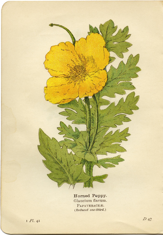 Yellow Flower clipart retro flower Flower flower flavum yellow printable