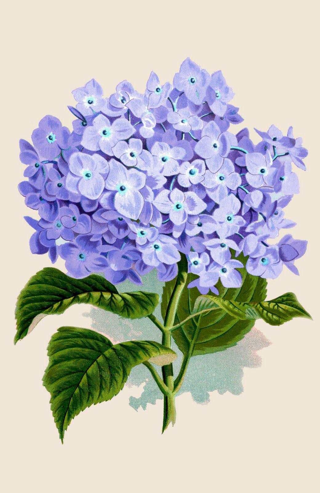 Vintage Flower clipart purple Images Remodelaholic Remodelaholic Printable Printable