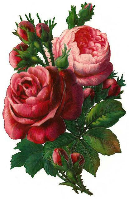 Rose clipart antique flower #10