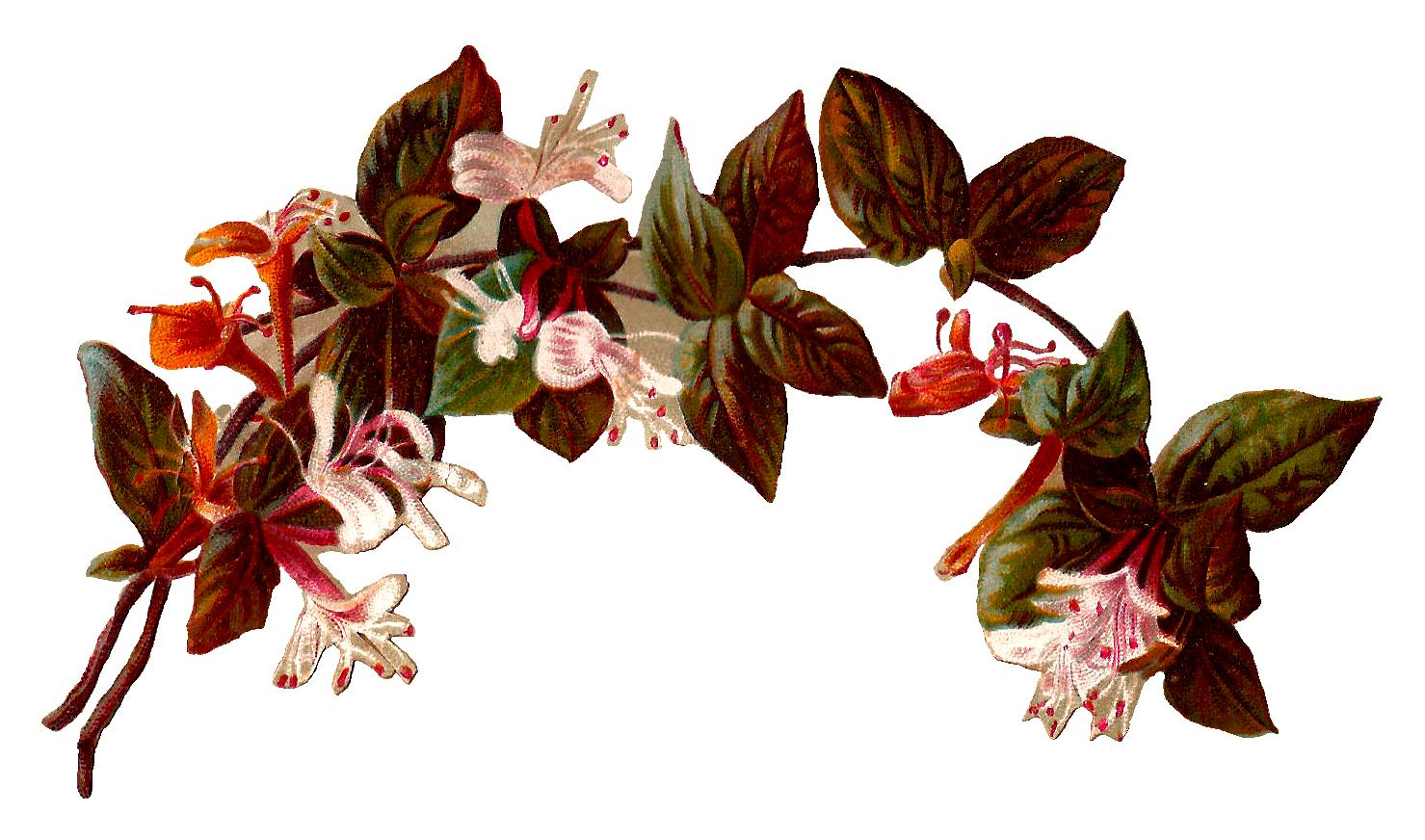 Vintage Flower clipart transparent Illustration Flower  Vintage Illustration