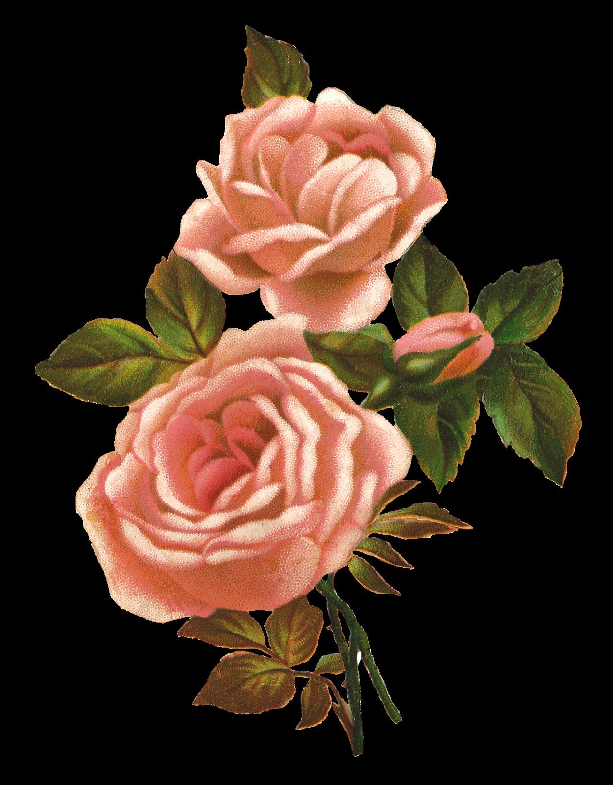 Vintage Flower clipart transparent Clip digital Clip png Art