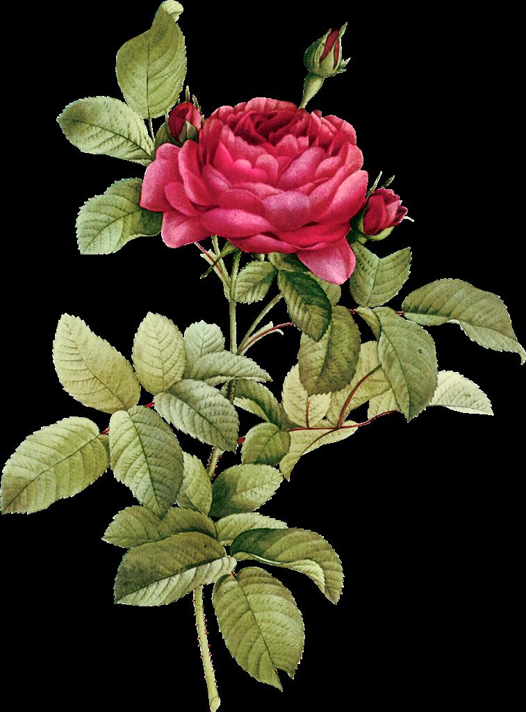 Vintage Flower clipart transparent Vintage Flower  png Buds