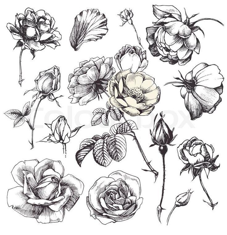 Vintage Flower clipart vintage line ✓ Flower Best sketches 14